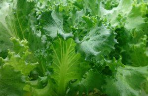 vegetable_02