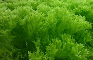 vegetable_01